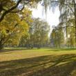 Beautiful autumn trees in city park — Stock Photo #6873934