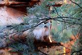 Příroda odráží — Stock fotografie
