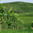 Hilly vineyard #3, baden - Stock Photo