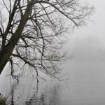 Tree bowed over foggy adda river — Stock Photo #6885912