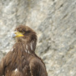 Stock Photo: Raptor at falconry show #2