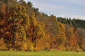 Gorgeous autumnal landscape, sieben muelen tal — Stock Photo