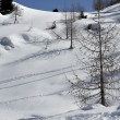 Trees on snowy slope, dolomites — Stock Photo