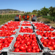 Fresh tomatoes on tractor — Stock Photo #6823582