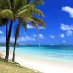 Tropical beach in mauritius island — Stock Photo #6827349