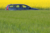 Modern car between yellow colza and green fields — Stock Photo