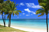 Mauritius: wonderful beach — Stock Photo