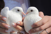 Pair of pigeons — Stock Photo