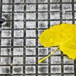 Leaf on pavement — Stock Photo #6823587