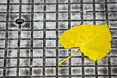 Leaf on pavement — Stock Photo
