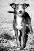 Liten hund — Stockfoto