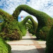 Amazing Gardens — Stock Photo