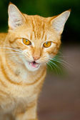 Cute little cat posing for picture — Stock Photo