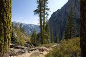 Downhill from Yosemite Falls — Stock Photo