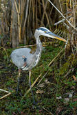 Everglades — Stok fotoğraf