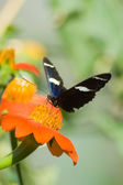 Sara Butterfly — Stock Photo