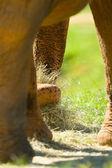Elephant up and close — Stock Photo