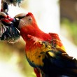 Macaw — Stock Photo #7583158