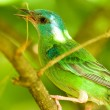 Green Bird — Stock Photo