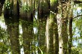 Swamp Reflections — Stock Photo