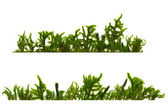 Two horizontally structures of different types of moss on a white — Stock Photo