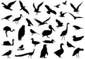 Shadows of birds — Stock Vector