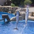 Stock Photo: Two dolphins