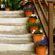 Stairs in alpin house with flower pots — Stockfoto