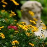 Jesienią w ogrodzie — Stock Photo #7136031