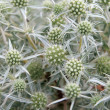 Stock Photo: Prickly plant