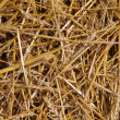 Stock Photo: Straw