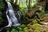 Beech forest waterfall — Stock Photo