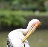 Stork bird — Stock Photo