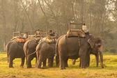 Elephant travel in Chitwan — Stock Photo