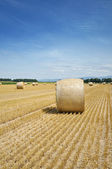 Hay bales on a filed against blue sky — Stock Photo