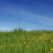 Green grass and yellow flowers against blue sky — Stock Photo