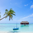 Palm tree and boat on tropical beach — Stock Photo