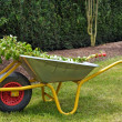 Wheelbarrow — Stock Photo #6922830