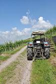 Tractor in vineyard on a sunny day — Stock Photo