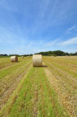 Meadow grasslands farm round bales in Texas — Stock Photo