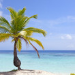 Palm tree on tropical beach — Stock Photo #6952769