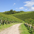 Path leading through vineyard landscape — Stock Photo #6953036