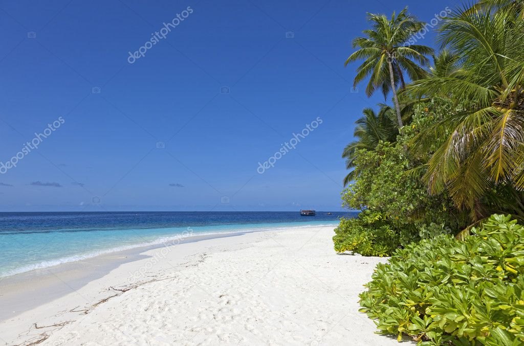 White Sand Beach Palm Tree White Sand Beach With Coconut