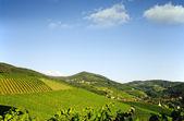 Beautiful vineyard landscape — Stock Photo