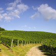 Curved path in vineyard landscape — Stock Photo