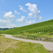 Path through vineyard — Stock Photo #7105758