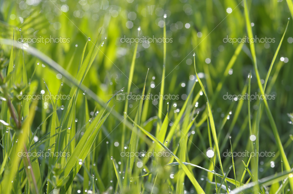 Dew drop on a blade of grass  — Stock Photo #7108871