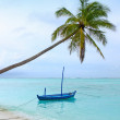 White sand beach with coconut palm trees — Stock Photo