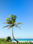 Palm tree on beach — Stock Photo
