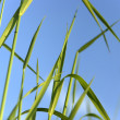 Foto Stock: Grass and sky